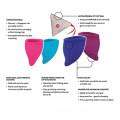 Fun Cup Explore Menstrual Cups - Fun Factory
